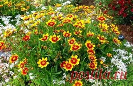 Какие яркие цветы можно посеять семенами в мае сразу на клумбу? | Секреты Сада | Яндекс Дзен