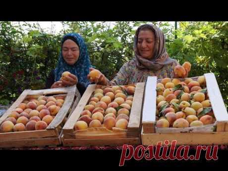 Персиковый Варенье, персиковый компот и персик в сиропе. Консервирование на Зиму