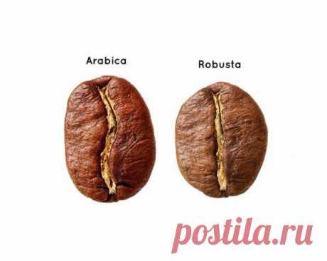 10 ОТЛИЧИЙ АРАБИКИ ОТ РОБУСТЫ. - DYNASTY OF CHEFS Знаете ли вы, что биологическое многообразие кофейного дерева насчитывает более 40 видов? Интересно, что при этом все коммерческое производство кофе