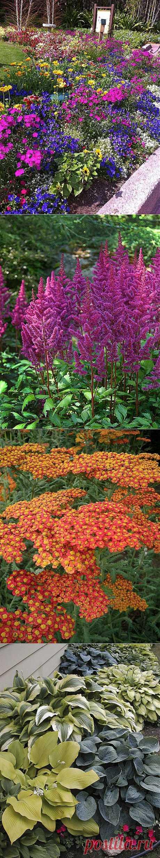 Неприхотливые многолетники для вашего сада: 10 лучших растений