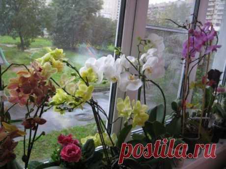 Цитокининовая паста: эффективное средство в помощь цветоводам, выращивающим орхидеи Орхидеи любимы многими цветоводами за яркие эффектные цветки. Но чтобы добиться цветения от капризного и требовательного в уходе растения, придётся регулярно уделять ему много времени и сил. Среди наи...