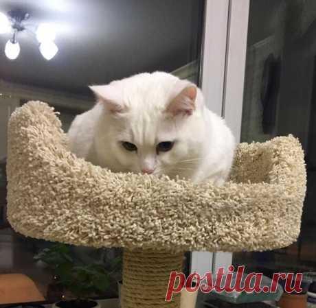 Приветствуйте кошку с помощью кошачьего этикета! | Дневник кошатницы | Яндекс Дзен