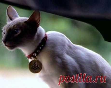 Имена кошек, которые приносят счастье и удачу в дом