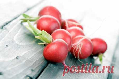 The best grades of a garden radish for the greenhouse and an open ground in the Spring when the organism is in great need in fresh vitamins, and the majority of plants on beds just increase green material, the garden radish can become the real lifesaver. Vegetable, in the people is more often...