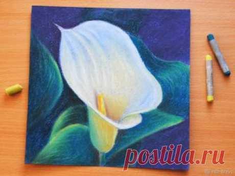 Рисуем пастелью изящный цветок каллы — Сделай сам, идеи для творчества - DIY Ideas