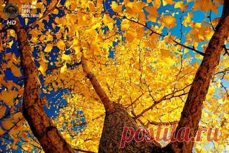 Осеннее настроение | Fresher - Лучшее из Рунета за день