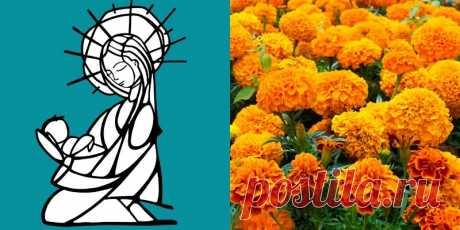 Золоті квіти, які вилікують шлунок, зір та печінку! Ростуть на кожній клумбі... | ОТОЖ