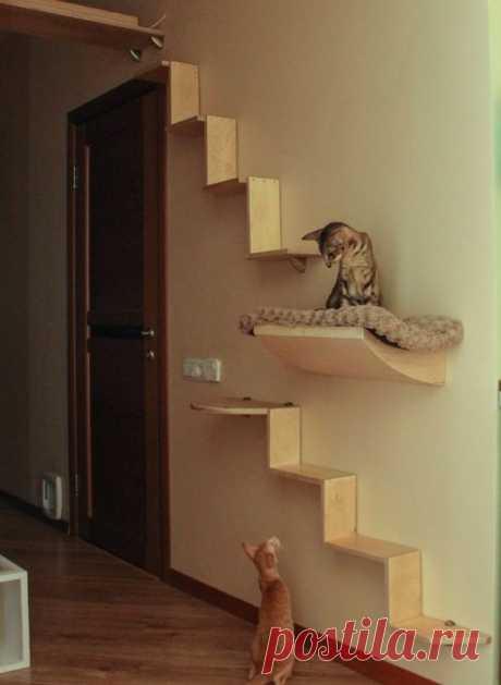 Увеличение жизненного пространства для кошек в доме или как «разделить территории»