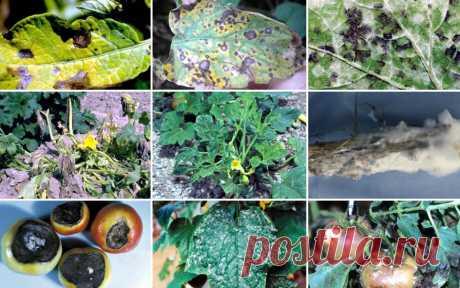 Самые опасные болезни овощей – фото, описания и меры борьбы в таблицах | Дела огородные (Огород.ru)