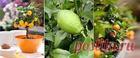 Как вырастить апельсин, грейфрут, лимон, финик, киви и даже авокадо из косточки на Supersadovnik.ru