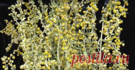 За 16 часов это растение способно истребить до 98 % раковых клеток! - Женский Журнал