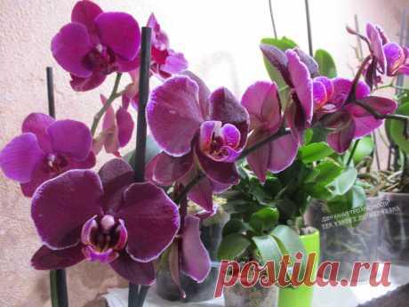 Копеечная витаминная подкормка орхидей из обычной аптеки: реанимирую даже орхидеи без корней | ПРО красивости: говорю о красоте | Яндекс Дзен