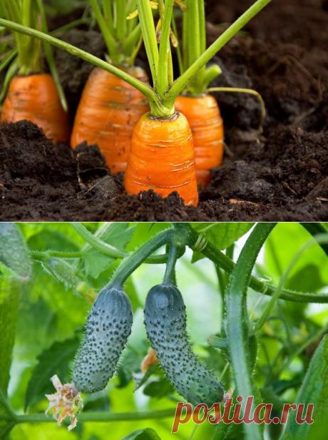 10 дачных культур для начинающего огородника