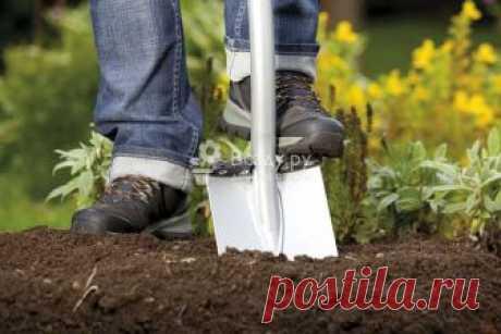 Осенняя посадка саженцев. Правила посадки молодых саженцев осенью. Какие растения лучше садить осенью, а какие летом. Подготовка, удобрение почвы.