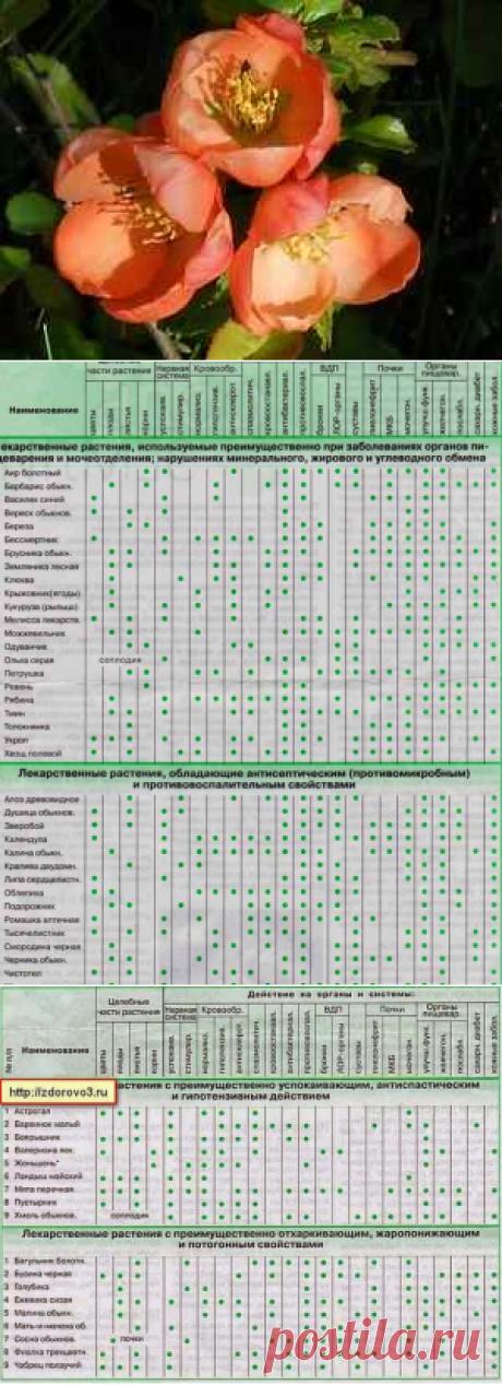 Лекарственные растения для лечения заболеваний