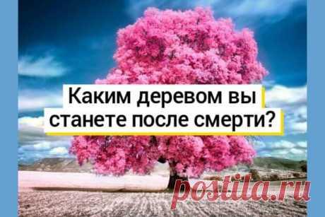 Тест: каким деревом вы станете после смерти? — Бабушкины секреты