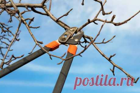 Осенняя обрезка в саду Разберем особенности осенней обрезки деревьев и кустарников в саду и дадим рекомендации по правильному проведению процедуры.