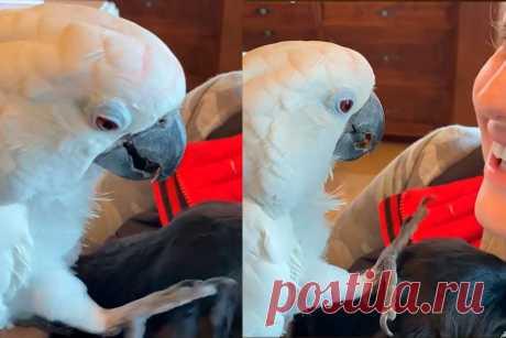 Нежный попугай приласкал щенка ивлюбил всебя соцсети. Ридус