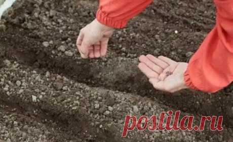 Цветы, которые можно сеять под зиму  Цветы посаженные под зиму будут отличаться хорошим ростом, устойчивостью к болезням и погодным условиям. Так же, посеяв семена под зиму вы освобождаете себе время весной. А его как раз тогда и не хватает.  Цветы, которые можно посадить осенью:  Однолетники: бархатцы; василек; резеду; космею; настурцию; амарант; дельфиниум; маттиола. Мак, адонис летний, алиссум морской, астра китайская, гвоздика китайская, годеция крупноцветковая. Иберис...