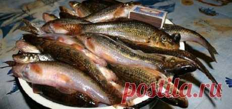 Как готовят пескарей настоящие рыболовы