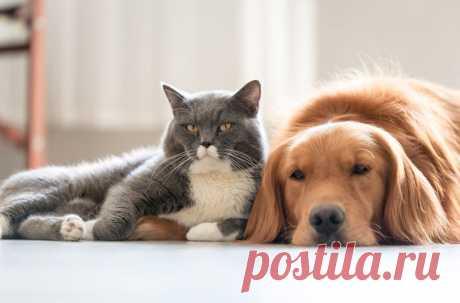 Идея о том, что собаки умнее кошек, поставлена под сомнение.
