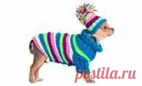 Шапочка для йорка спицами - Мастер-классы по рукоделию с фото, видео, схемами и описаниями пошагово Из этой статьи вы узнаете: Как связать шапку для собаки спицами и крючком?Шапки для собак своими рукамиРазновидности шапок для собакПредназначение, функциональные особенности шапокМодели шапок для собакКак сшить шапку для собаки своими рукамиВыкройка и пошивКак связать шапку для собакиКак сделать шапку для собаки своими руками, виды шапокЗачем нужен головной уборКаким порода...
