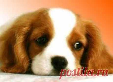 Воспитание щенка | Домохозяйки