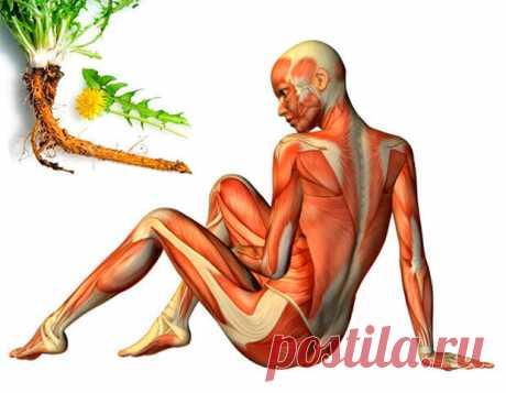 """Корень одуванчика от варикоза, отеков и псориаза. - Познавательный сайт ,,1000 мелочей"""" - медиаплатформа МирТесен Всем привычный одуванчик, а, точнее, его корень может применяться при ряде заболеваний. Одуванчик имеет ценный химический состав: витамины А, К, С, Е, клетчатка, кальций и калий, белок, фолиевая кислота и витамины комплекса В. Корень одуванчика может помочь при проблемах пищеварения, варикозном"""