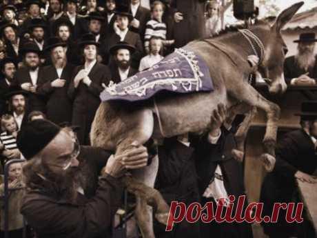 О чём говорят еврейские фамилии | Поистине