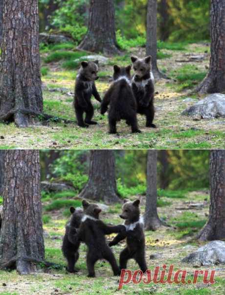 Хоровод медвежат | ЛЮБИМЫЕ ФОТО