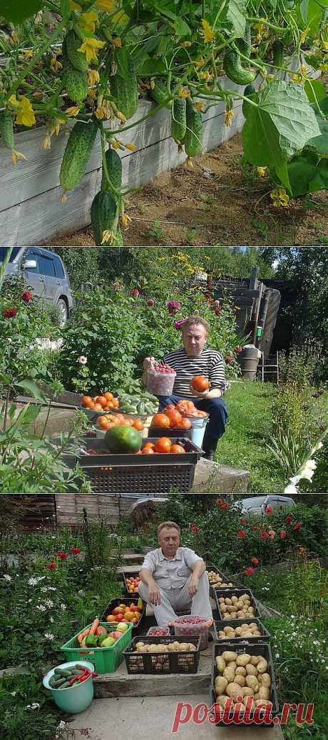Про то, как у меня дела - Урожайные грядки от Игоря Лядова