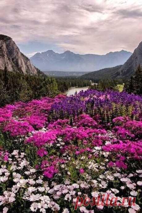 Райская долина                                                                                             « ЦВЕТЫ – ОСТАТКИ РАЯ НА ЗЕМЛЕ » Иоанн Кронштадтский Цветы - остатки Рая на Земле, И может от того мы так их любим. Вдыхая аромат, любуясь в тишине, Мы никогда о Рае не забудем!