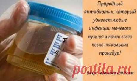 Природный антибиотик, который убивает любые инфекции мочевого пузыря и почек всего после нескольких процедур! | Всё для Тебя  Существует метод лечения этих инфекций совершенно естественным образом: Инфекции мочевого пузыря или мочевыводящих путей могут быть крайне неприятными, болезненными, и длительными. Двумя наиболее распространенными симптомами этих инфекций являются частые позывы к мочеиспусканию, а также чувство жжения во время мочеиспускания. Они наиболее часто встр...