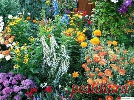 10 многолетников, цветущих все лето Часто начинающие цветоводы интересуются, какие многолетники цветут все лето. Именно для них мы нашли подборку самых красивых, на наш взгляд, цветов, которые должны понравиться и остальным.1. Астранция крупная (Astrantia major)Красивое многолетнее растение около 70 см высотой. Начинает...