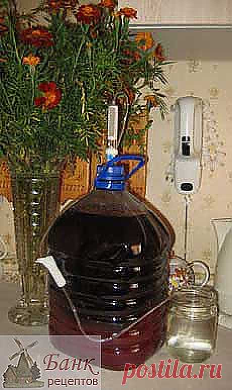 La receta del vino de casa de chernoplodnoy los serbales.