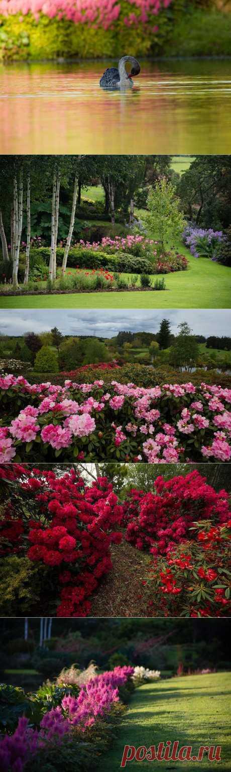 Восхитительный сад Maple Glen в Новой Зеландии :  НОВОСТИ В ФОТОГРАФИЯХ