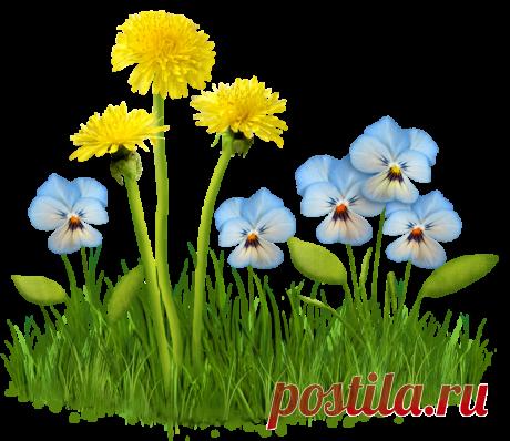 Всякие разные цветы PNG.