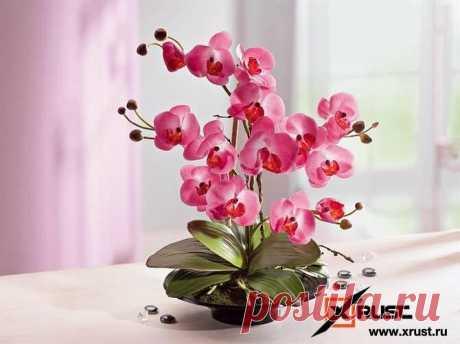 Орхидея будет цвести 3 раза в год | Xrust | Яндекс Дзен