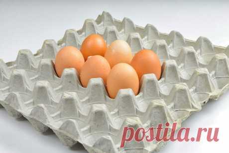 Как можно использовать яичные лотки на даче и в хозяйстве