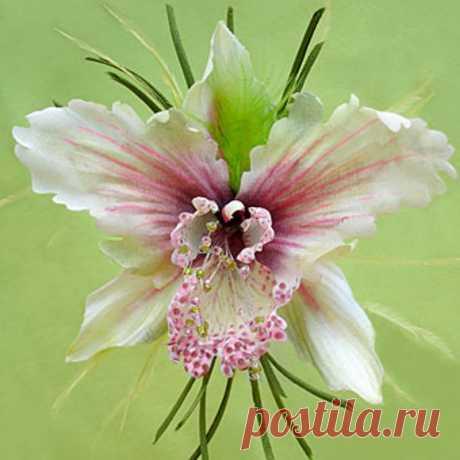 """Брошь-орхидея """"Лилу"""""""