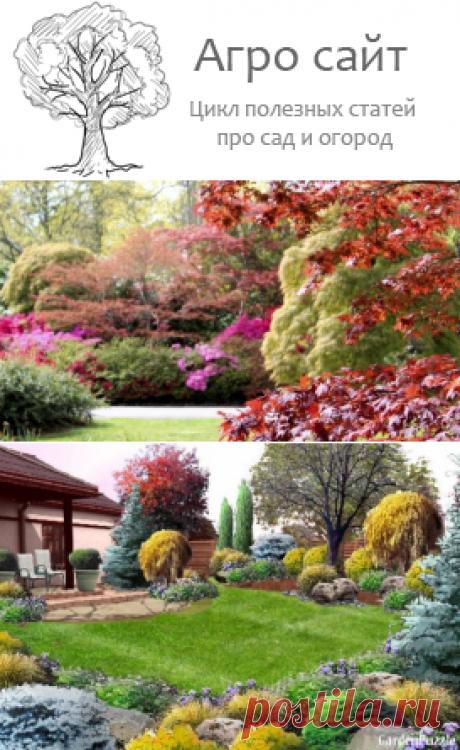Работы саду осенью - чем обрабатывать деревья