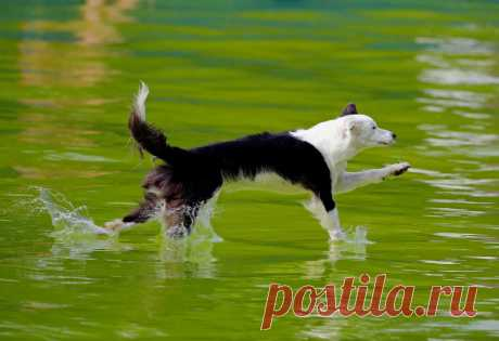 Конкурс летающих собак   Чёрт побери