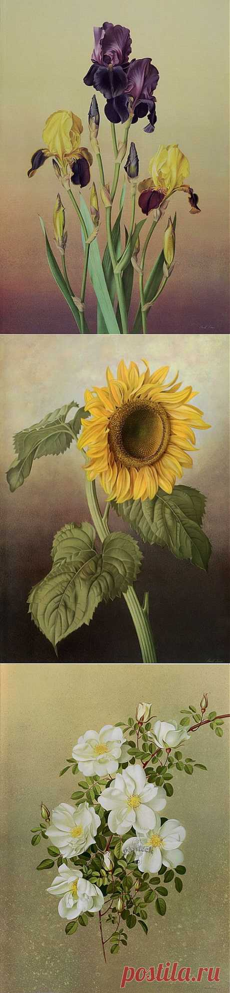 Акварельные рисунки цветов от Paul Jones.