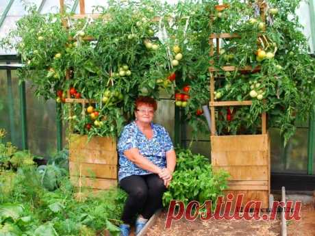 """How to grow up tomatoes in a flank\"""" the Female World"""