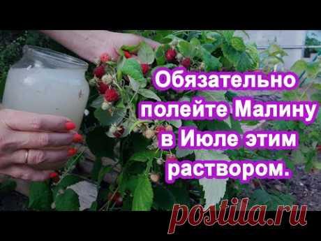 1 Литр в Июле под Малину. Завалит ягодами увеличиваем урожай. Подкормка для плодовых кустарников.