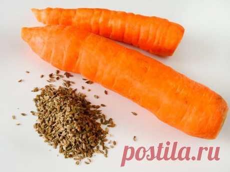 Сею семена моркови в феврале на бумажные салфетки – экономия времени и сил   Добрый дачник   Яндекс Дзен