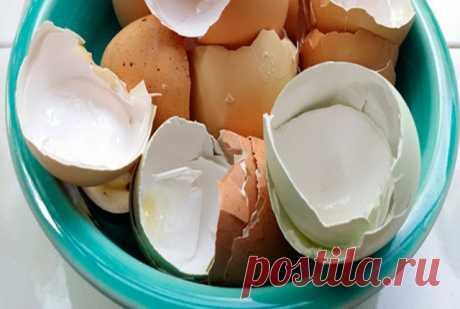 УЗНАЛ САМ - РАССКАЖИ ДРУГОМУ!: Вы перестанете выбрасывать яичную скорлупу, когда узнаете для чего она нужна