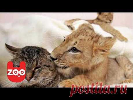 ▶ Woman Lives With Lions - YouTube