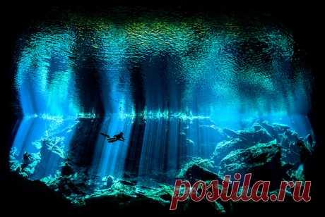 Фотографы показали необычайные красоты подводного мира  Ник Блейк (Nick Blake) не сразу стал фотографом. До того, как заняться подводной съемкой, он несколько лет был дайвером. Подводная часть пещеры на мексиканском острове Юкатан привлекла его впечатляющ…