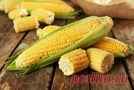 Кукуруза: польза и вред для здоровья организма